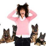 Köpek Korkusu Kinofobi Nedir? Nasıl Geçer?