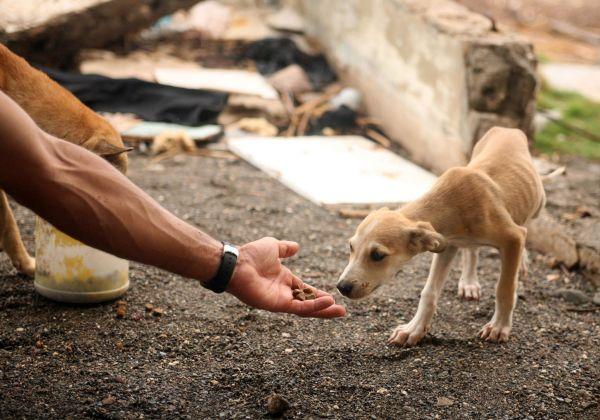 Hayvanlara yardım etmek