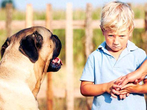 köpek korkusu kinofobi nedir