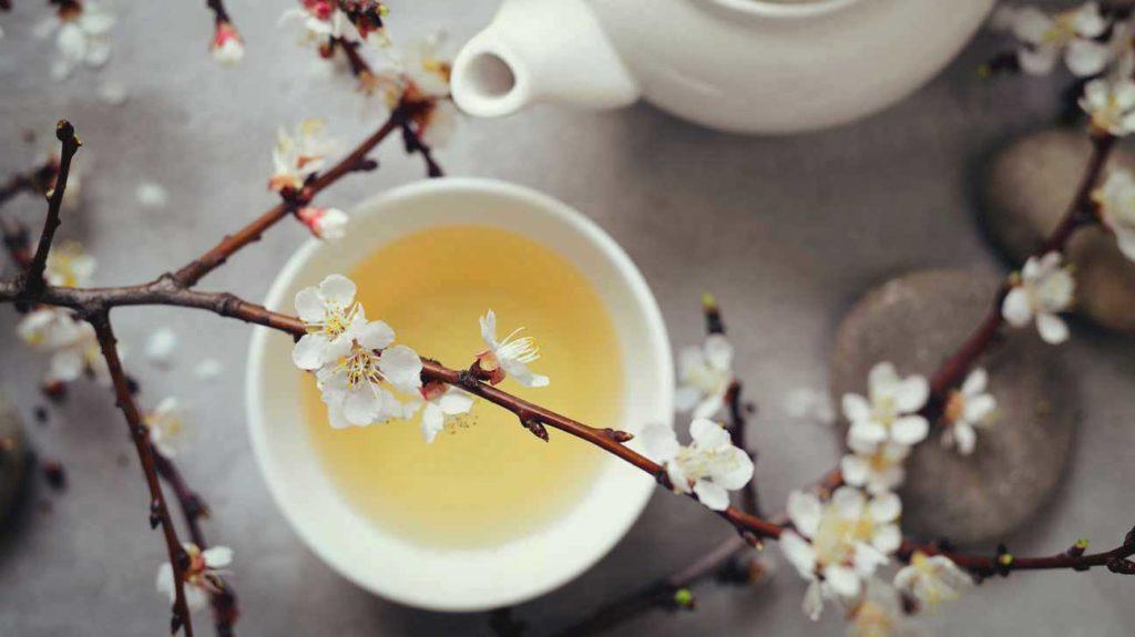 Beyaz çay Faydaları Uykusuzluk Için Bitki çayı